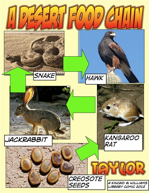 organisms of a food chain in the desert What is a producer plants are the first level in the food chain or food webs and are known as primary producers they make all the food and energy that is found in.