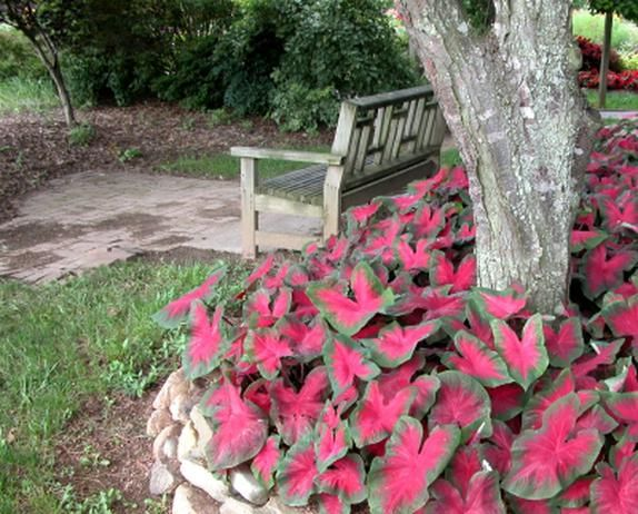 Colorful Plants For Shady Summer Gardens