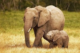 Mommy and baby elephant!