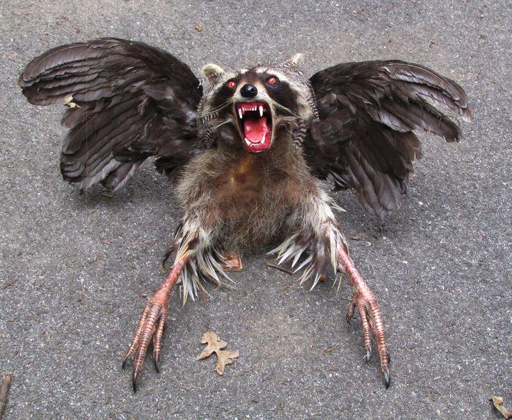 Half lifesize snallygaster cryptid monster raccoon mount ...