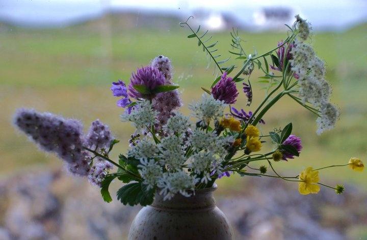 Lillian s Flowers  Ion...