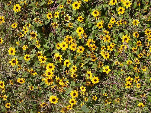 Flora en Teotihucan