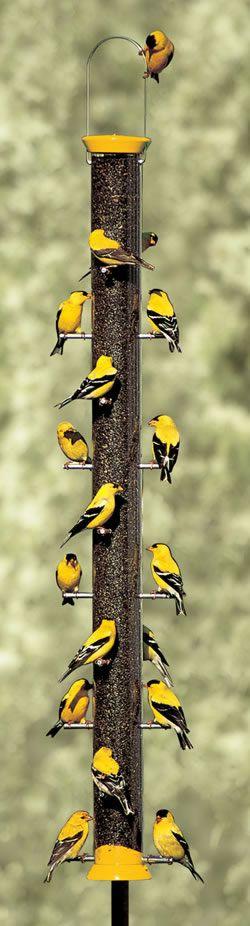 wow.... lucky birder!