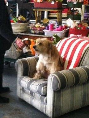 Los Angeles: LOST dog Wesley