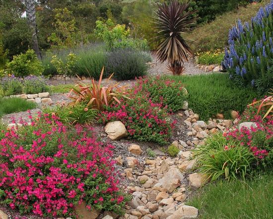 Landscaping A Sunny Hillside : Lush desert landscape design garden