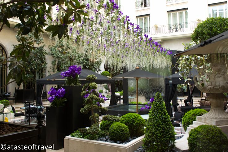 Outside in the courtyard, blue orchids hung from their heads creating another stunning canopy. Flowers at the Hotel George V, 2012.