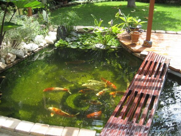 Koi Pond Backyard : backyard koi pond  Backyard Koi Pond! , This is a little bigger than