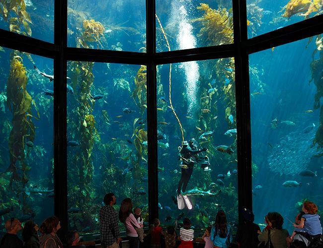 Monterey Bay Aquarium San Francisco