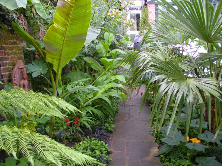 Backyard Jungle Tropical Landscapes :  like this tropical backyard , backyards and tropical landscaping