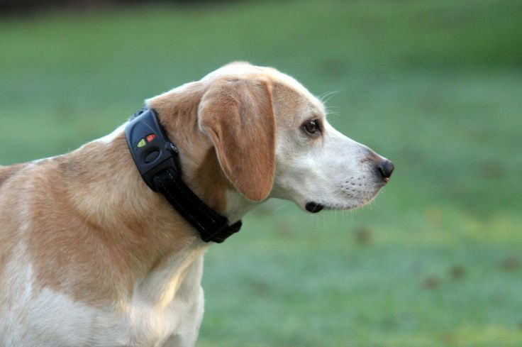 dog tracking collar for iphone