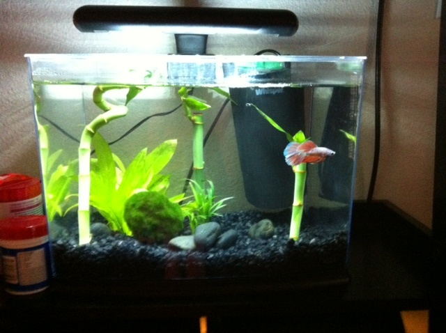 betta fish tank 3 gallon aquarium fish tank 3 gallon