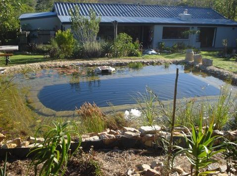 Pin by christine andrews on eco home pinterest for Ecosystem pool