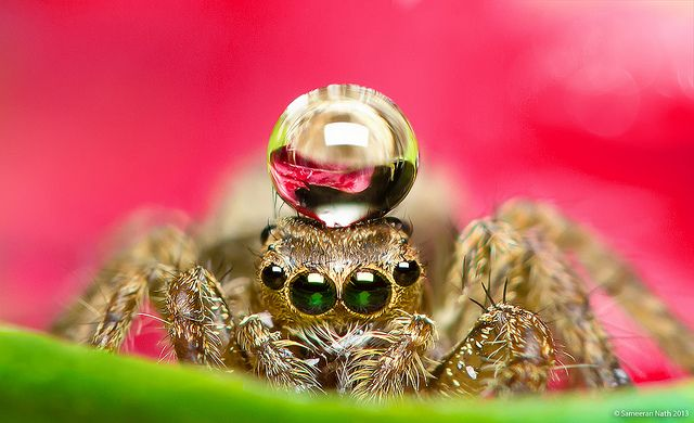 Jumping spider water hat - photo#22