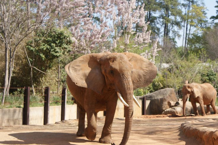 Riverbanks Zoo And Gardens Places I Have Been Pinterest