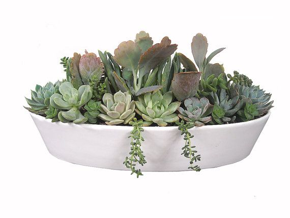 Pastel succulent garden 13 white boat shaped ceramic pot dish garden - Dish garden containers ...