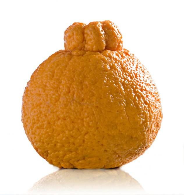 As the tangerine-tangelo season wanes, Sumo citrus will be in some area markets as late as May.