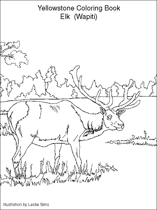 yellowstone coloring pages - photo#4