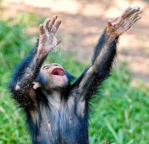 Happy monkey | Animals | Pinterest