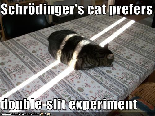 double slit experiment schrodinger's cat | Can you teach me a little ...