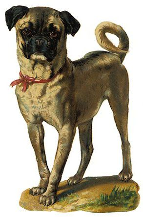 Skinny Pug antique die cut victorian scrap