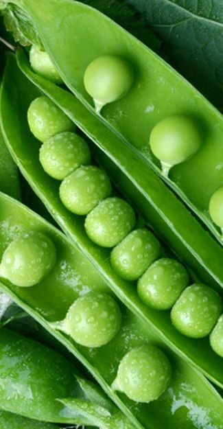 # vegetables # - The Mighty Little Green Pea... Right off the Vine... Yum...