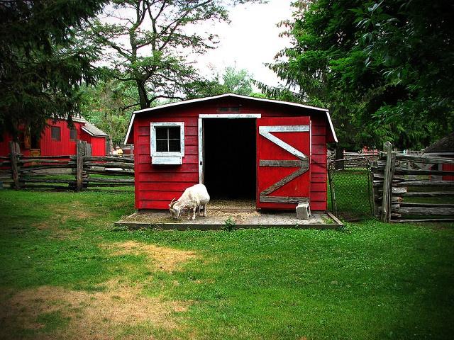 Suburban Backyard Farming : backyards