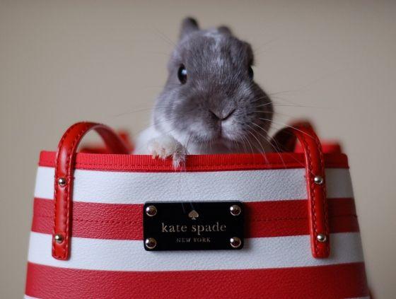 bunny bag! @Sydney Kent, @Alexandra Harreys