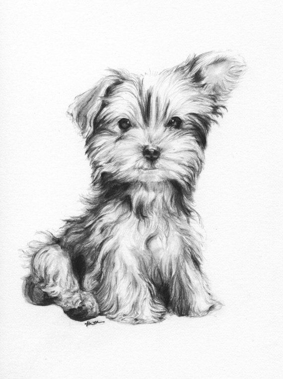Line Drawing Yorkie : Custom pet portrait in pencil perfect gift