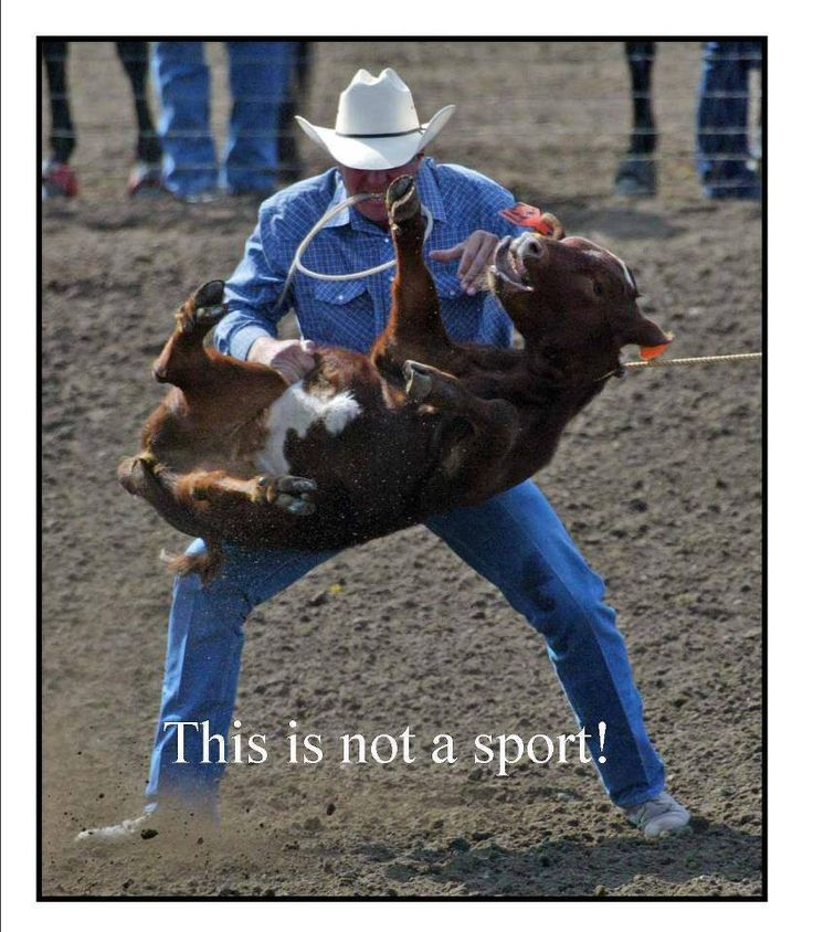 """Rodeos give free license to cowards to abuse baby calves. Is it so hard to think for a minute how you would feel and react if, say a gorilla, was """"playing"""" like that with your own child?! Calves experience pain and fear just the same way as human children do."""