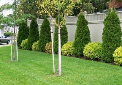 How to Care for a Neighbors Garden
