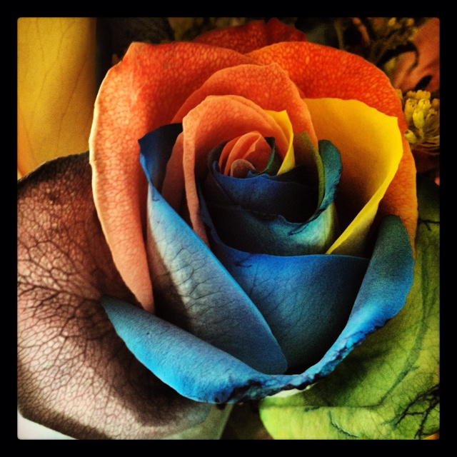 Tie-dye Rose