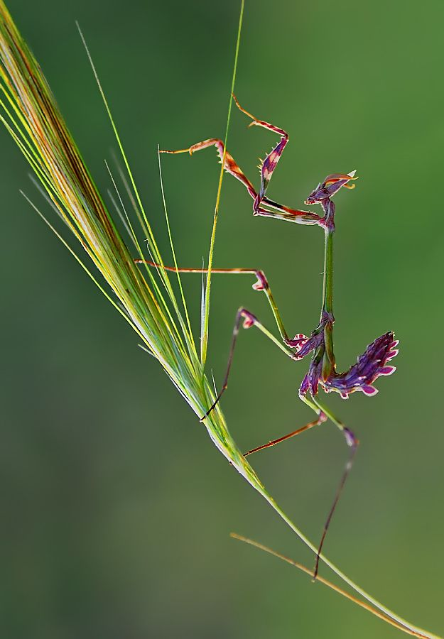Fantastični insekti - Page 4 D52425944af3c2604d6c22f198a9d436