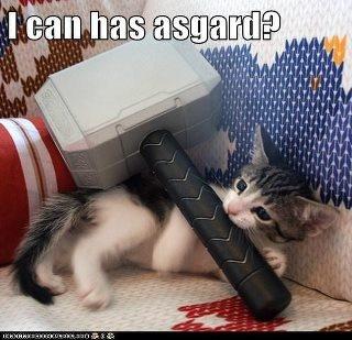 Thor's kitten