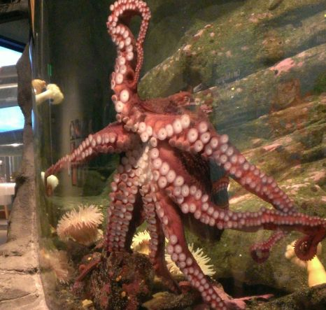 Seattle Aquarium Laze Of Days Blog Pinterest
