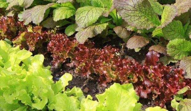 Urban vegetable gardening garden pinterest