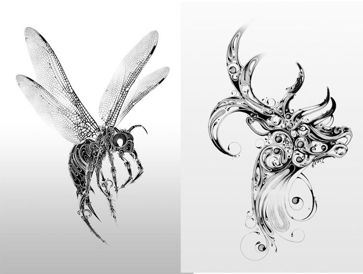 illustrator si scott takes drawing insects and animals to