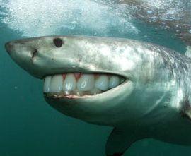 Sharks with human teeth - photo#24