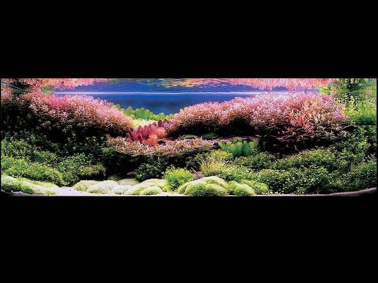 Amano Aquascape Related Keywords & Suggestions - Amano Aquascape Long ...
