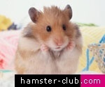 Love this.Hamsters :)