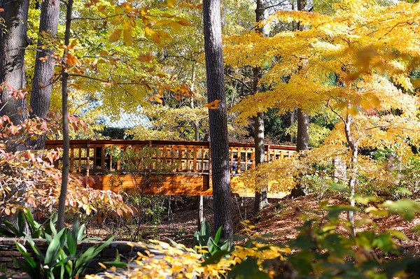 Pedestrian bridge in the forest flanked by trees with yellow leaves