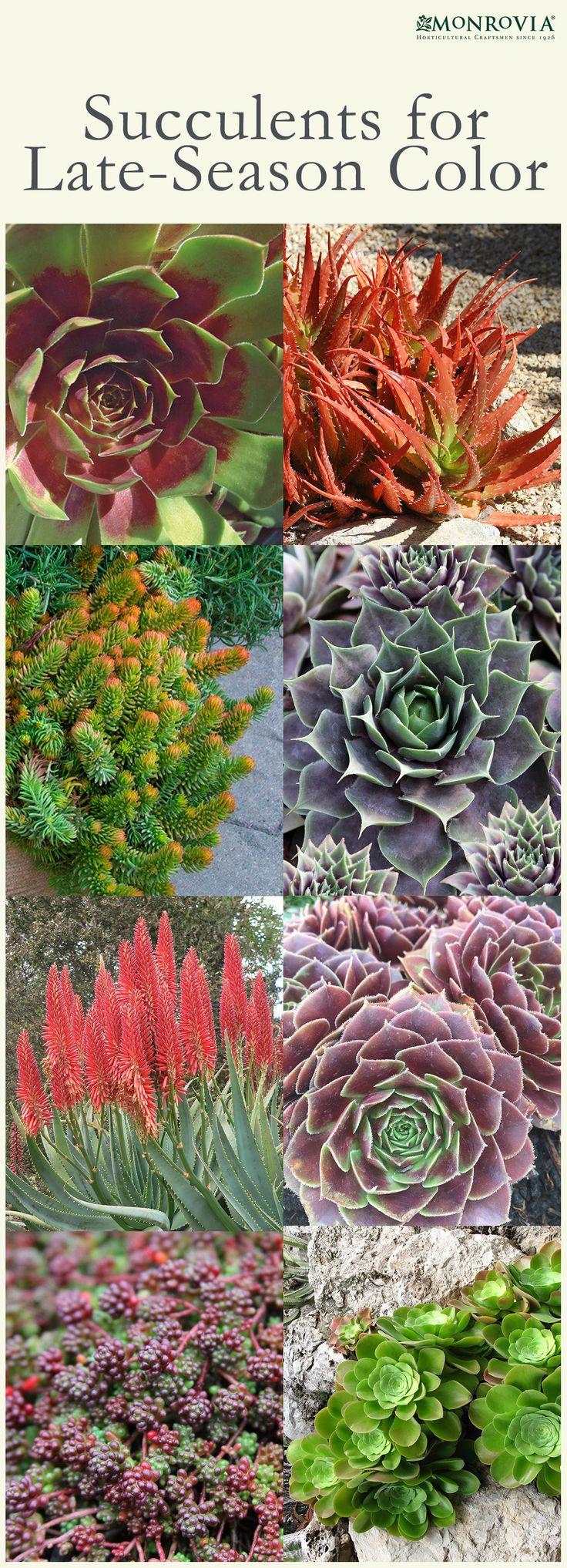 Infographics sedums plants