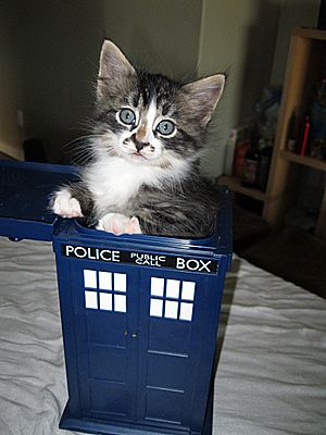 The long search was over: Kitteh had finally found a box that was bigger on the inside.