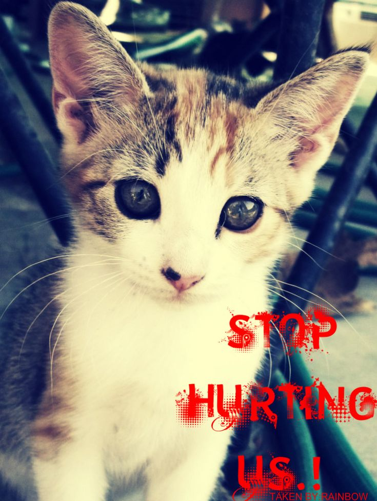 save animals from abuse.. stop animal cruelty!
