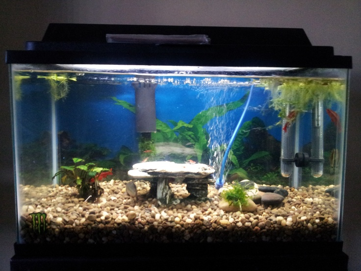 10 gallon fish tank setup member spotlight on rbacchiega