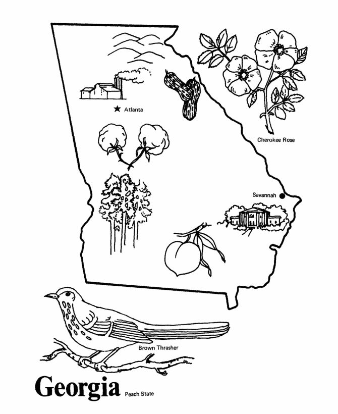 georgia state symbols coloring pages - photo#2