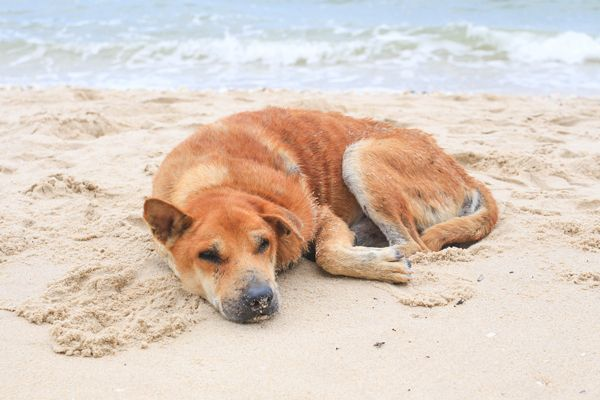 Wish summer could last forever quot lovable dogs pinterest