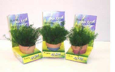 air fern buy air fern product on