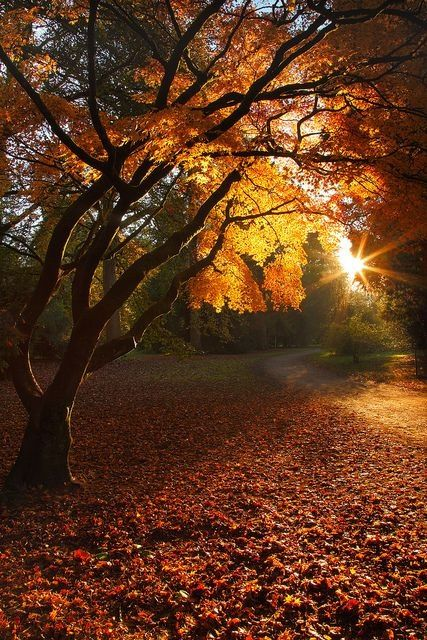 Good Morning Sunshine ~ beautiful autumn sun (I do miss the changing leaves at times)