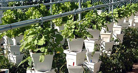Dise o casero para huertos urbanos huertos pinterest for Diseno de jardines caseros