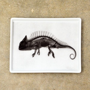 Chameleon X-Ray Tray Small now featured on Fab.